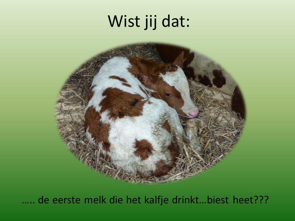 ….. de eerste melk die het kalfje drinkt…biest heet??? Wist jij dat:
