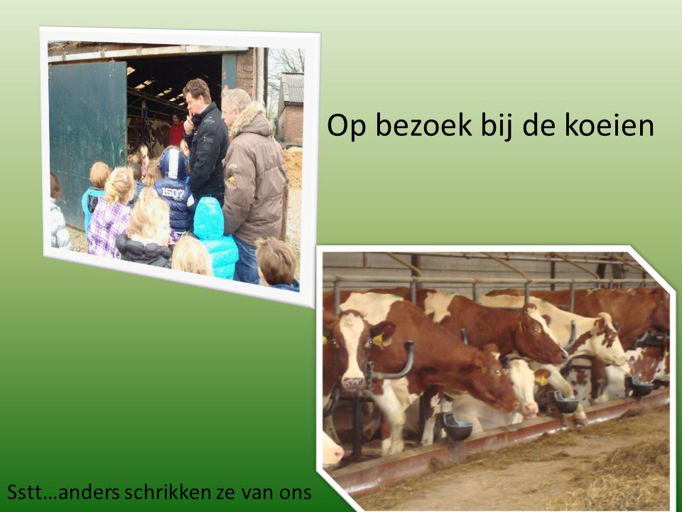 Op bezoek bij de koeien Sstt…anders schrikken ze van ons