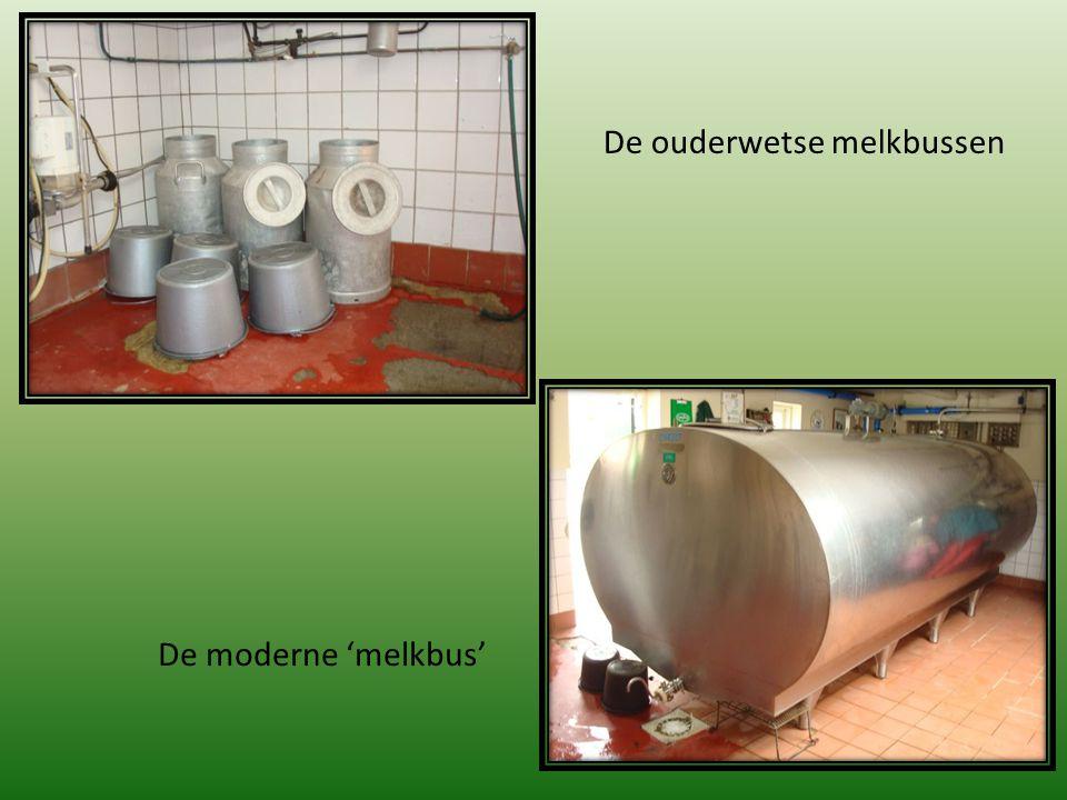 Twee keer per dag worden de koeien gemolken en wordt de melk in de moderne 'melkbus' opgeslagen.