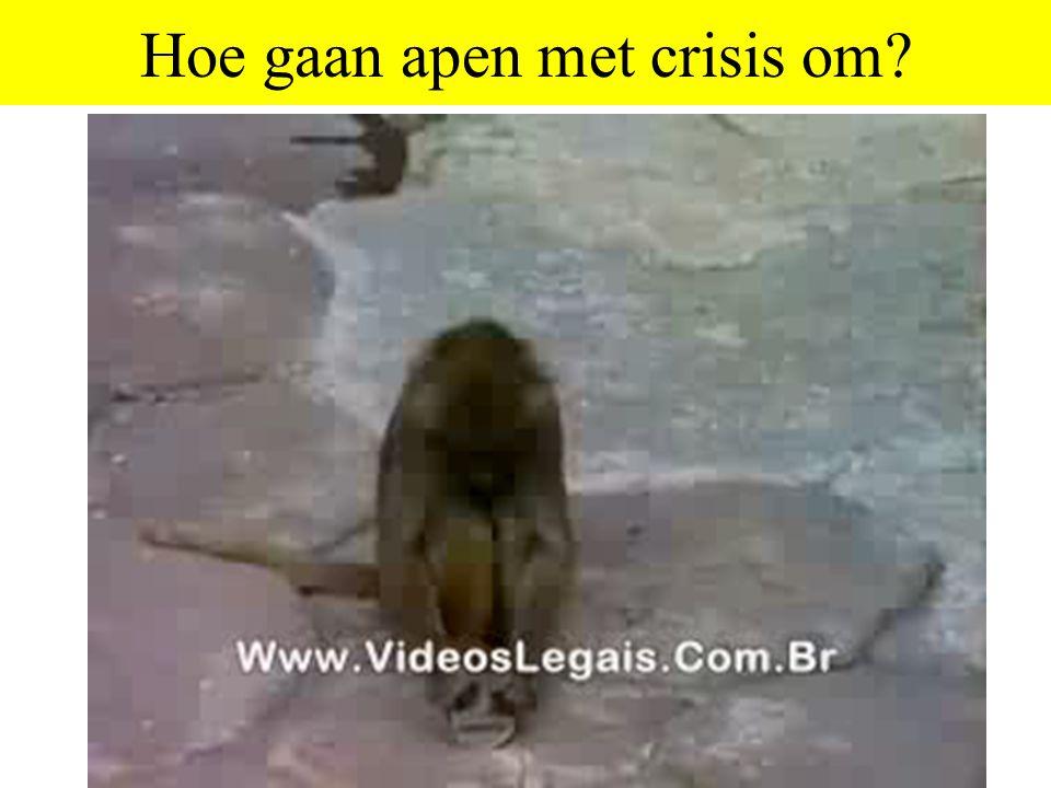 Hoe gaan apen met crisis om?