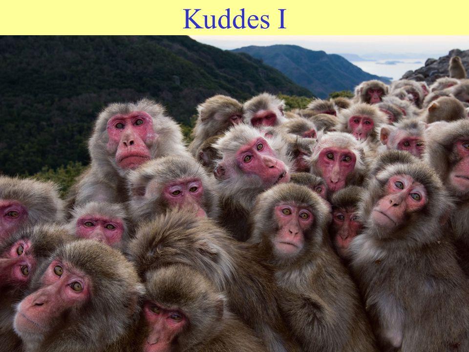 Kuddes I Het leven is niet altijd een pretje, voor mens noch aap Mensen en apen zoeken soortgenoten op voor troost De mens is, net als de aap een gewo