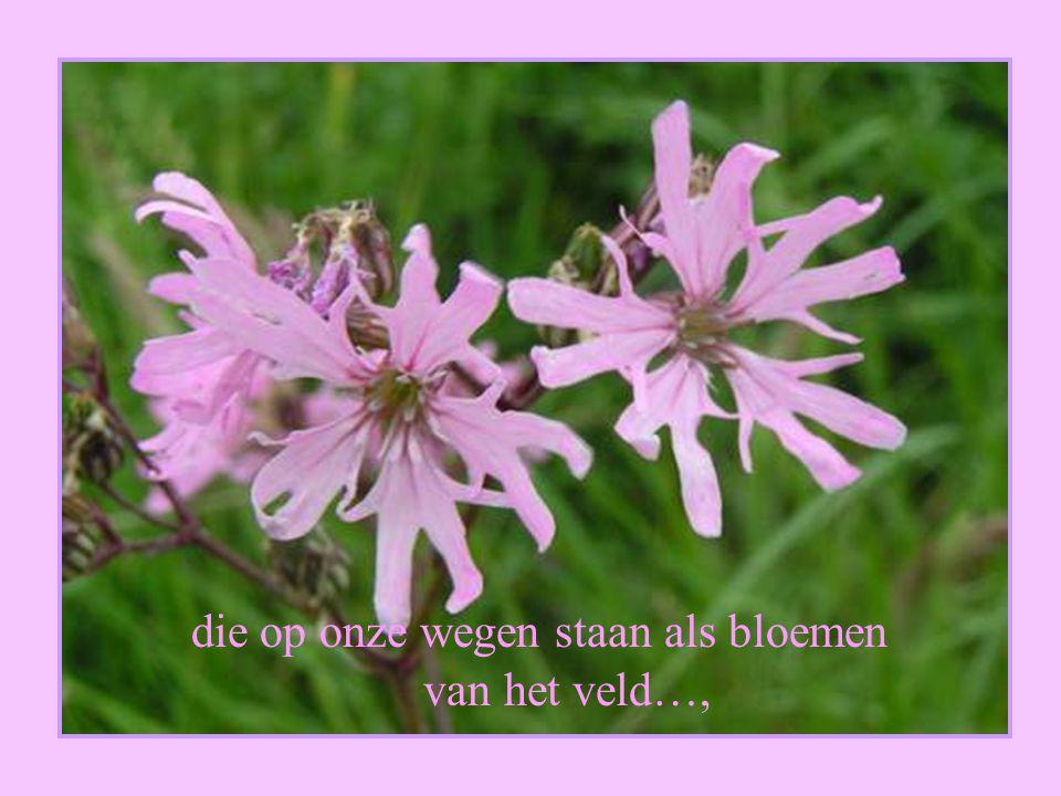 die op onze wegen staan als bloemen van het veld…,