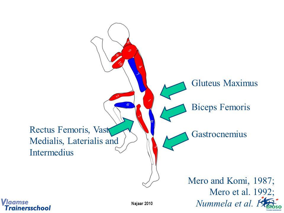 Gluteus Maximus Gastrocnemius Rectus Femoris, Vastus Medialis, Laterialis and Intermedius Biceps Femoris Mero and Komi, 1987; Mero et al.