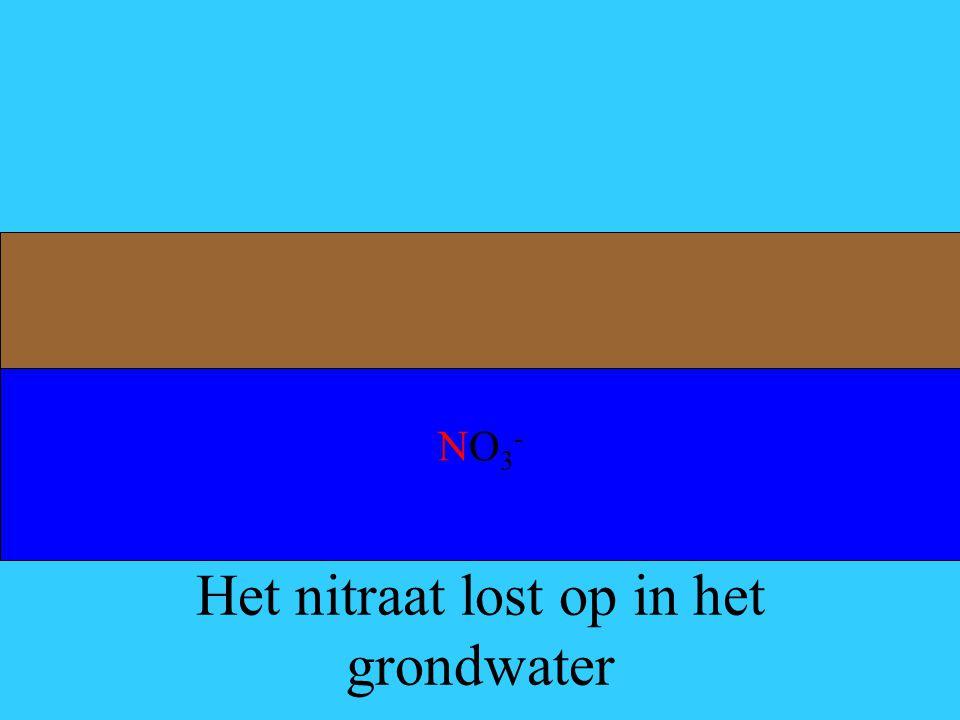 Het nitraat lost op in het grondwater NO3-NO3-