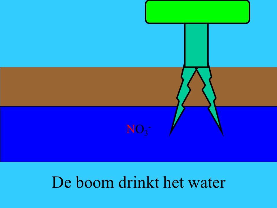 De boom drinkt het water NO3-NO3-