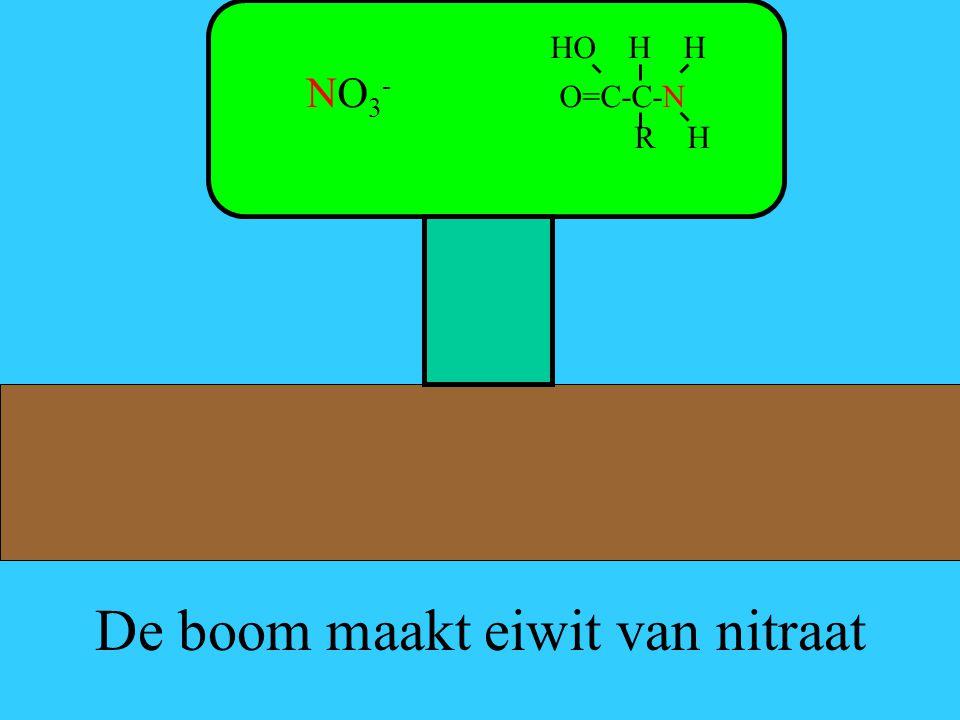 De boom maakt eiwit van nitraat HO H H NO 3 - O=C-C-N R H