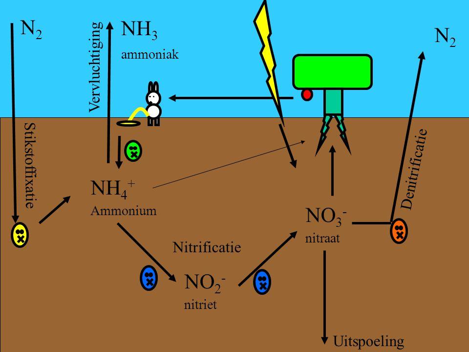 NH 4 + Ammonium Nitrificatie NO 3 - nitraat NO 2 - nitriet Uitspoeling Denitrificatie N2N2 Vervluchtiging NH 3 ammoniak Stikstoffixatie N2N2