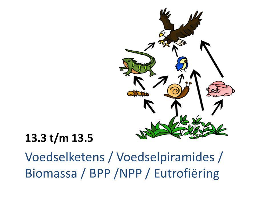 Voedselketen Producent Consument 1 e orde Consument 2 e orde Consument 3 e orde Autotroof = kunnen zelf hun organische stoffen maken (fotosynthese) Heterotroof = andere organismen nodig om aan organische stoffen te komen Autotroof Heterotroof Heterotroof Heterotroof