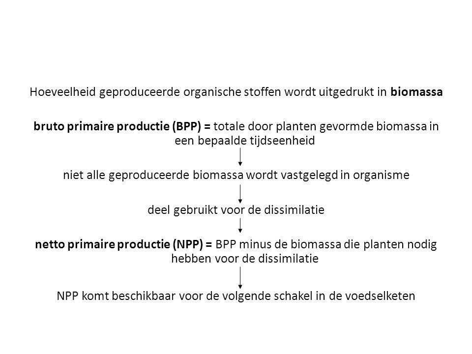 Hoeveelheid geproduceerde organische stoffen wordt uitgedrukt in biomassa bruto primaire productie (BPP) = totale door planten gevormde biomassa in een bepaalde tijdseenheid niet alle geproduceerde biomassa wordt vastgelegd in organisme deel gebruikt voor de dissimilatie netto primaire productie (NPP) = BPP minus de biomassa die planten nodig hebben voor de dissimilatie NPP komt beschikbaar voor de volgende schakel in de voedselketen