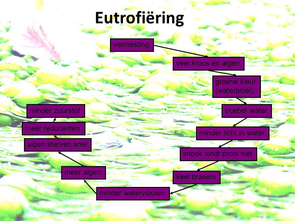vermesting veel kroos en algen minder licht in water groene kleur (waterbloei) troebel water algen sterven snel snoek vindt prooi niet veel brasem minder watervlooien meer algen meer reducenten minder zuurstof Eutrofiëring