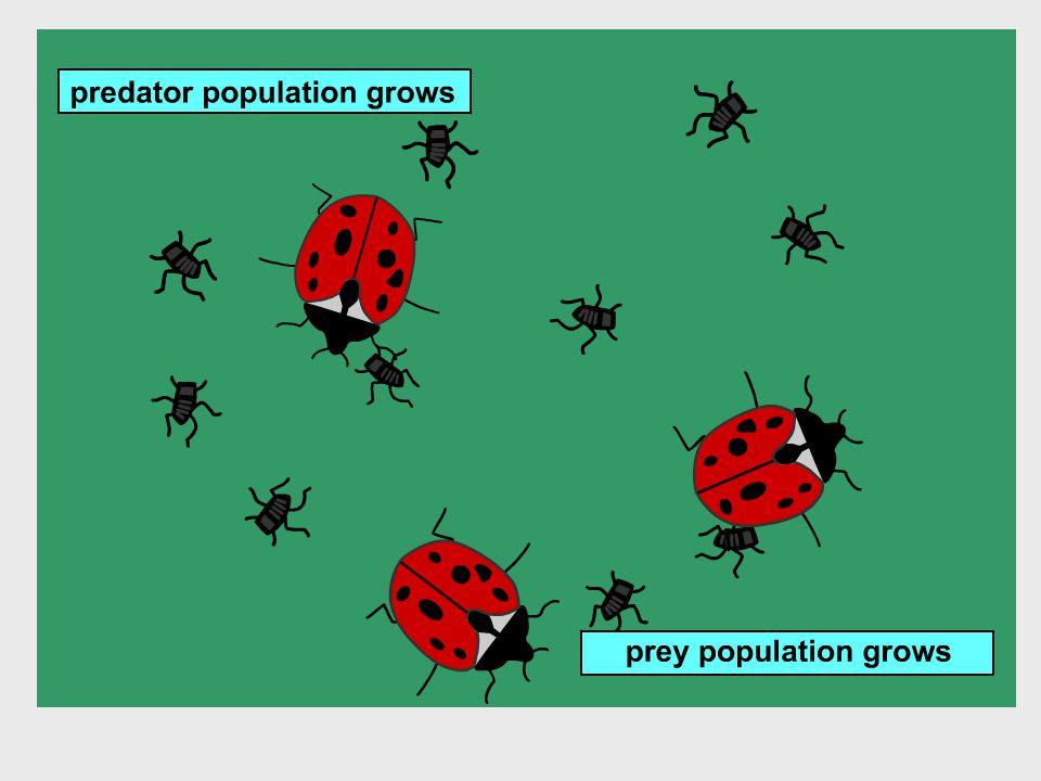 Populatiegroei S-curve = voldoende voedsel aanwezig + natuurlijke vijand aanwezig.