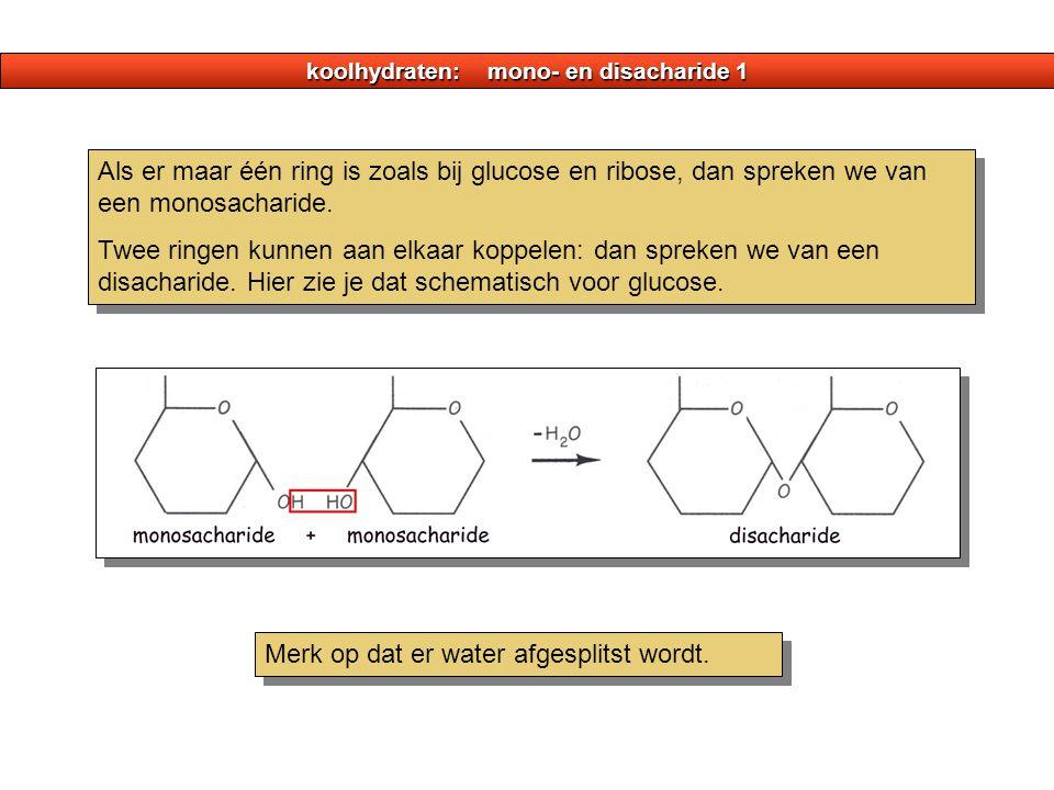 koolhydraten: mono- en disacharide 1 Als er maar één ring is zoals bij glucose en ribose, dan spreken we van een monosacharide. Twee ringen kunnen aan