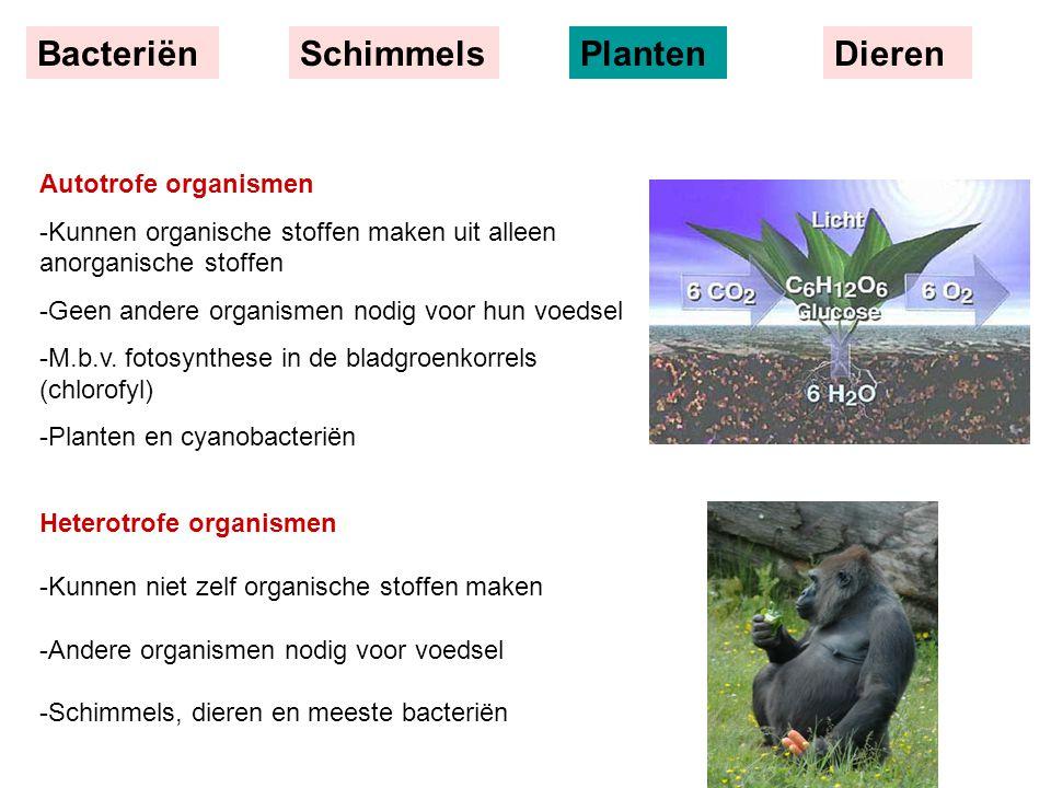 BacteriënSchimmelsPlantenDieren Autotrofe organismen -Kunnen organische stoffen maken uit alleen anorganische stoffen -Geen andere organismen nodig voor hun voedsel -M.b.v.