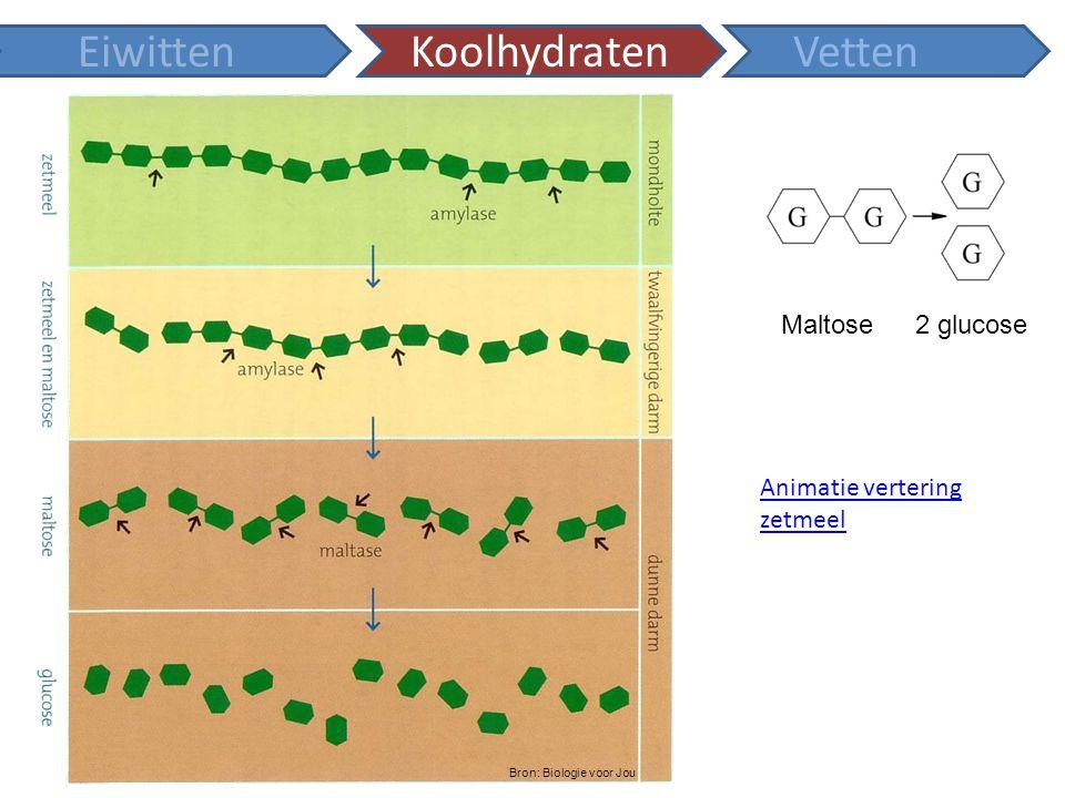 Animatie vertering zetmeel EiwittenKoolhydratenVetten Maltose2 glucose Bron: Biologie voor Jou