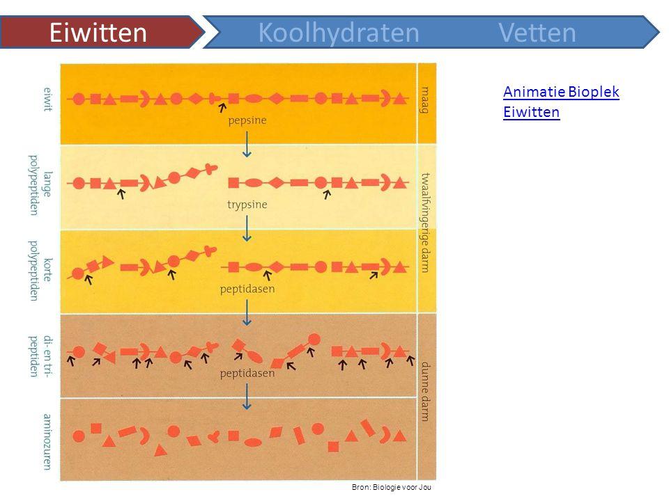 Animatie Bioplek Eiwitten KoolhydratenVetten Bron: Biologie voor Jou