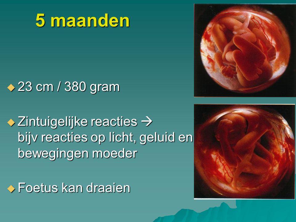 5 maanden  23 cm / 380 gram  Zintuigelijke reacties  bijv reacties op licht, geluid en bewegingen moeder  Foetus kan draaien