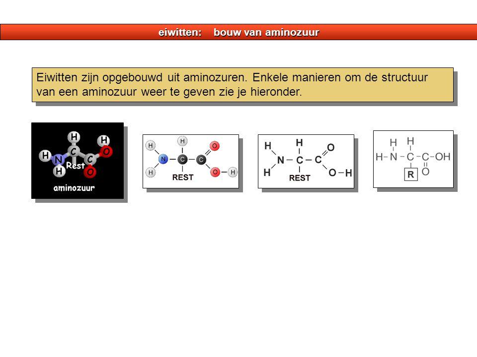 eiwitten: bouw van aminozuur Eiwitten zijn opgebouwd uit aminozuren. Enkele manieren om de structuur van een aminozuur weer te geven zie je hieronder.