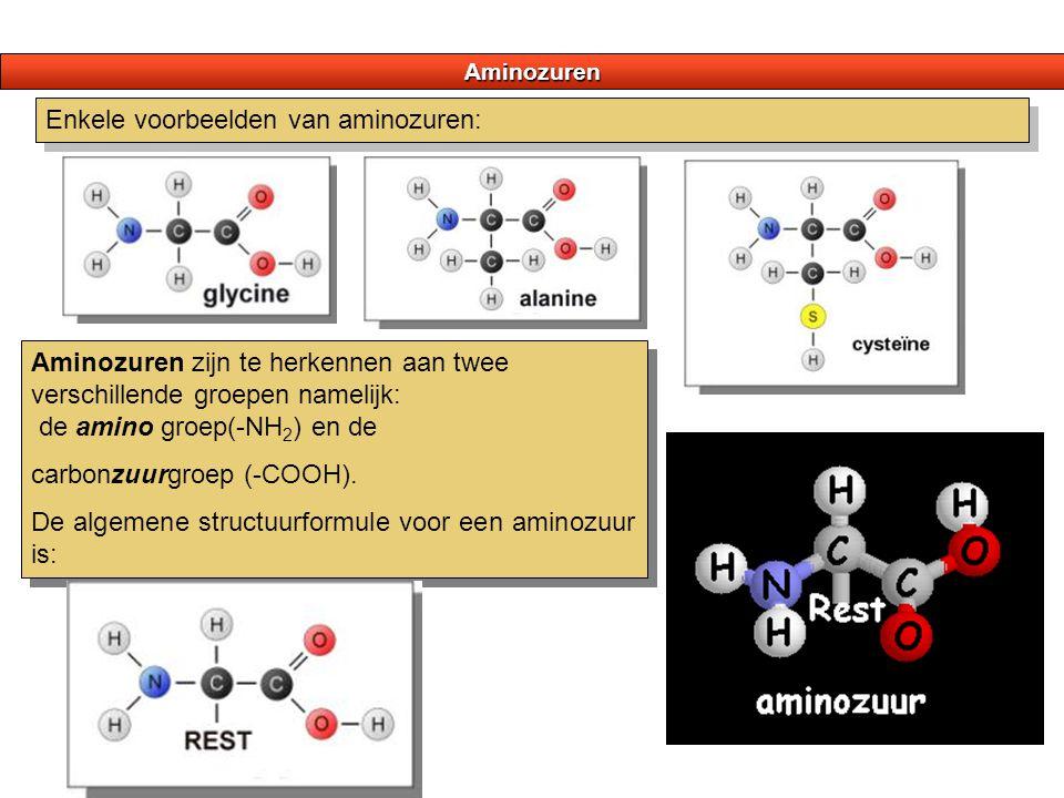 Aminozuren Enkele voorbeelden van aminozuren: Aminozuren zijn te herkennen aan twee verschillende groepen namelijk: de amino groep(-NH 2 ) en de carbo
