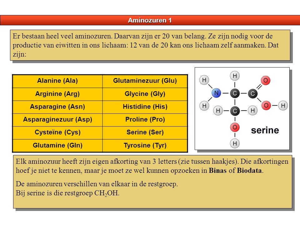 Aminozuren 1 Er bestaan heel veel aminozuren. Daarvan zijn er 20 van belang. Ze zijn nodig voor de productie van eiwitten in ons lichaam: 12 van de 20