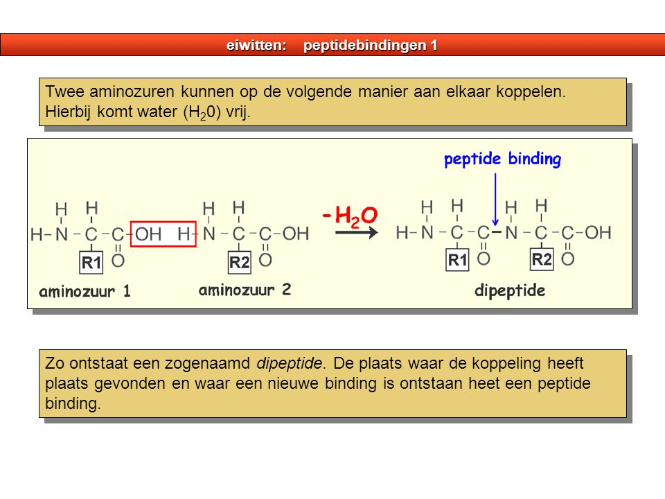 eiwitten: peptidebindingen 1 Twee aminozuren kunnen op de volgende manier aan elkaar koppelen. Hierbij komt water (H 2 0) vrij. Zo ontstaat een zogena