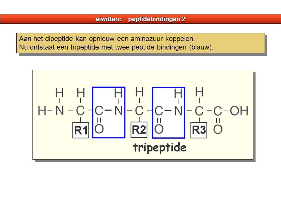 eiwitten: peptidebindingen 2 Aan het dipeptide kan opnieuw een aminozuur koppelen. Nu ontstaat een tripeptide met twee peptide bindingen (blauw).