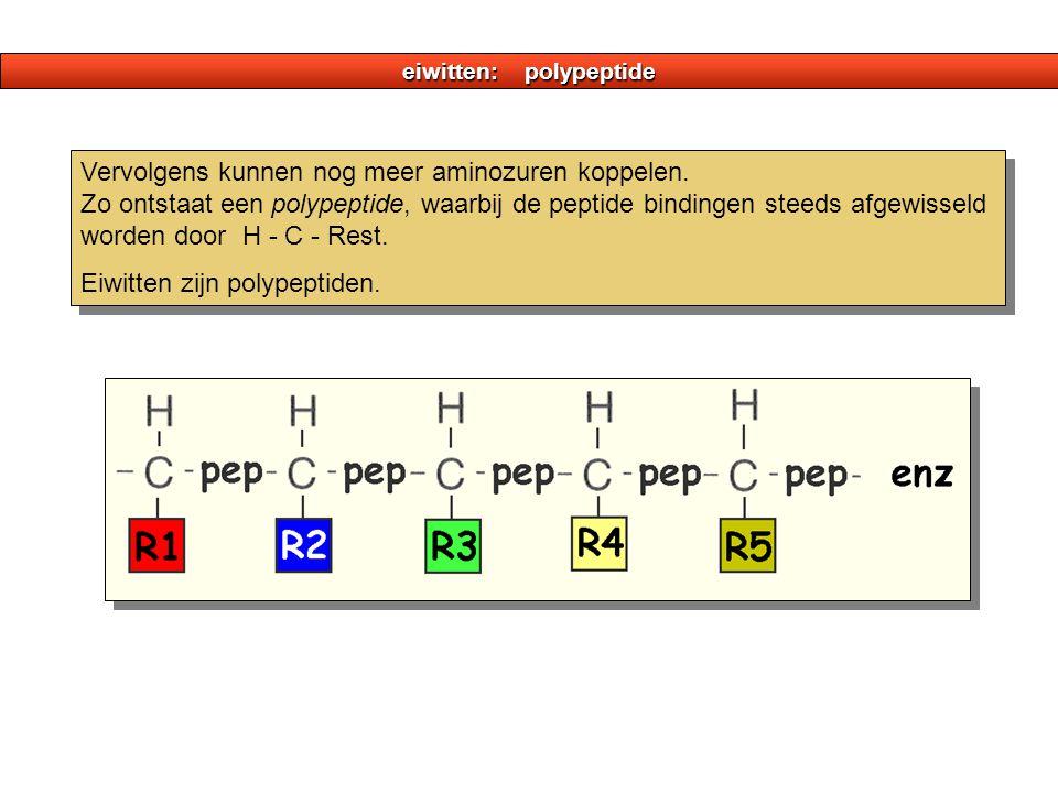 eiwitten: polypeptide Vervolgens kunnen nog meer aminozuren koppelen. Zo ontstaat een polypeptide, waarbij de peptide bindingen steeds afgewisseld wor