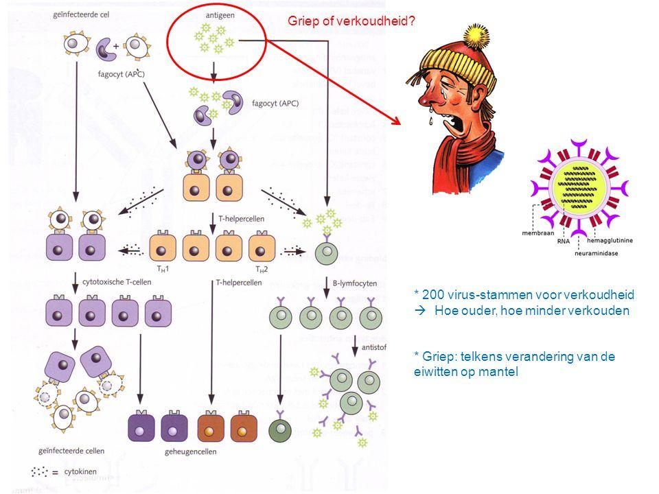 Griep of verkoudheid? * 200 virus-stammen voor verkoudheid  Hoe ouder, hoe minder verkouden * Griep: telkens verandering van de eiwitten op mantel
