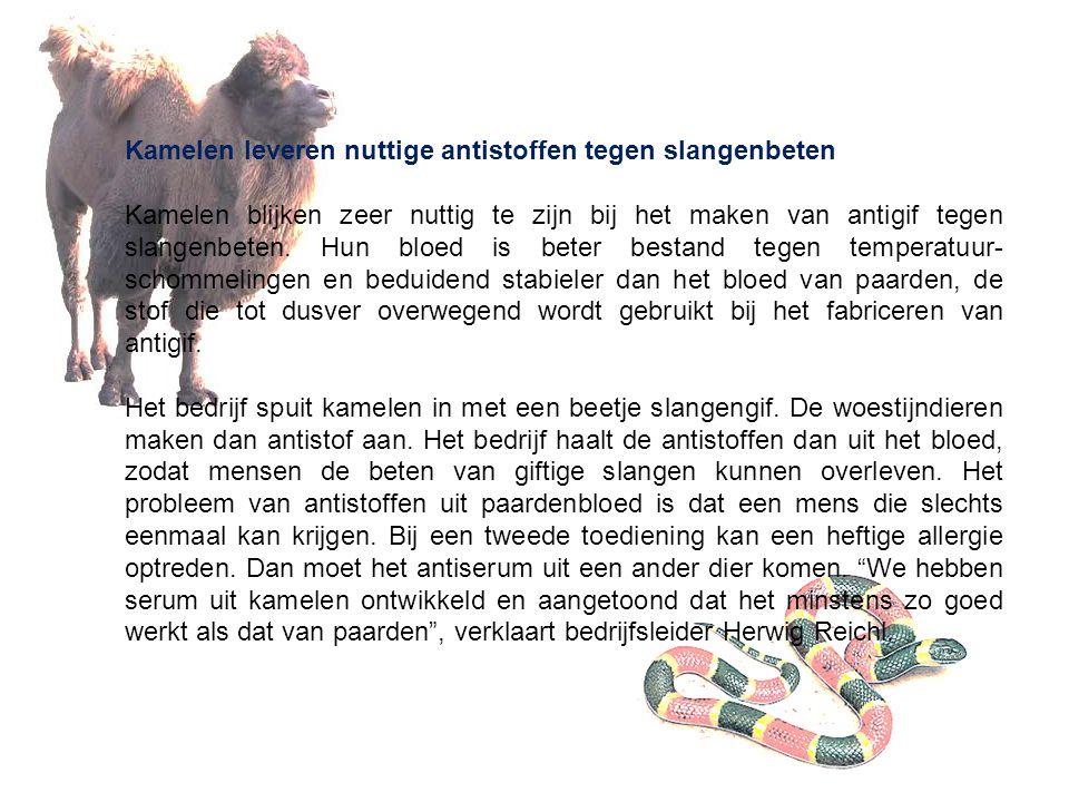 Kamelen leveren nuttige antistoffen tegen slangenbeten Kamelen blijken zeer nuttig te zijn bij het maken van antigif tegen slangenbeten. Hun bloed is