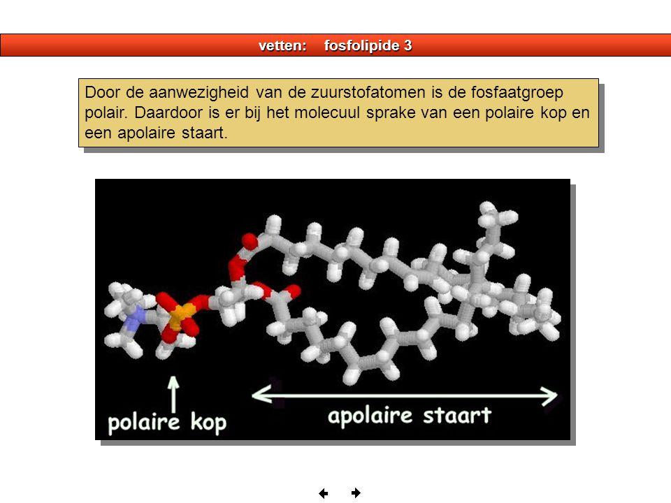 vetten: fosfolipide 3 Door de aanwezigheid van de zuurstofatomen is de fosfaatgroep polair.