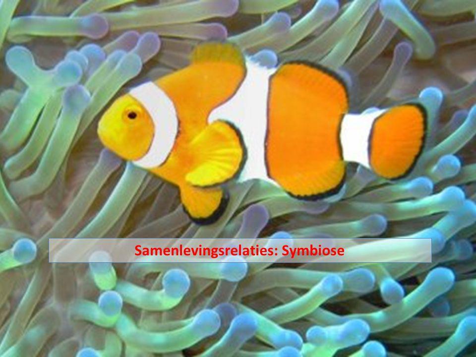 Symbiose = langdurig samenleven van individuen van verschillende soorten Samenlevingsrelaties: Symbiose