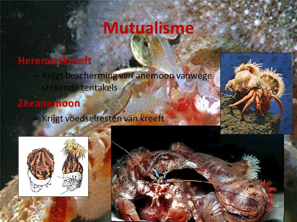 Mutualisme Heremietkreeft – Krijgt bescherming van anemoon vanwege stekende tentakels Zeeanemoon – Krijgt voedselresten van kreeft