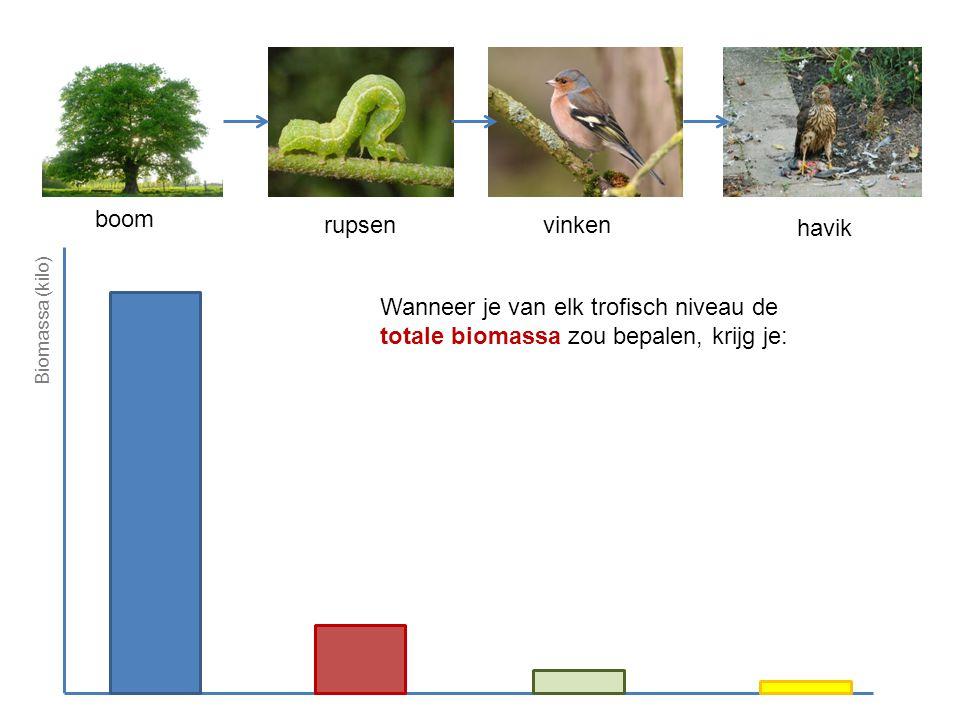 havik vinkenrupsen boom Biomassa (kilo) Wanneer je van elk trofisch niveau de totale biomassa zou bepalen, krijg je: