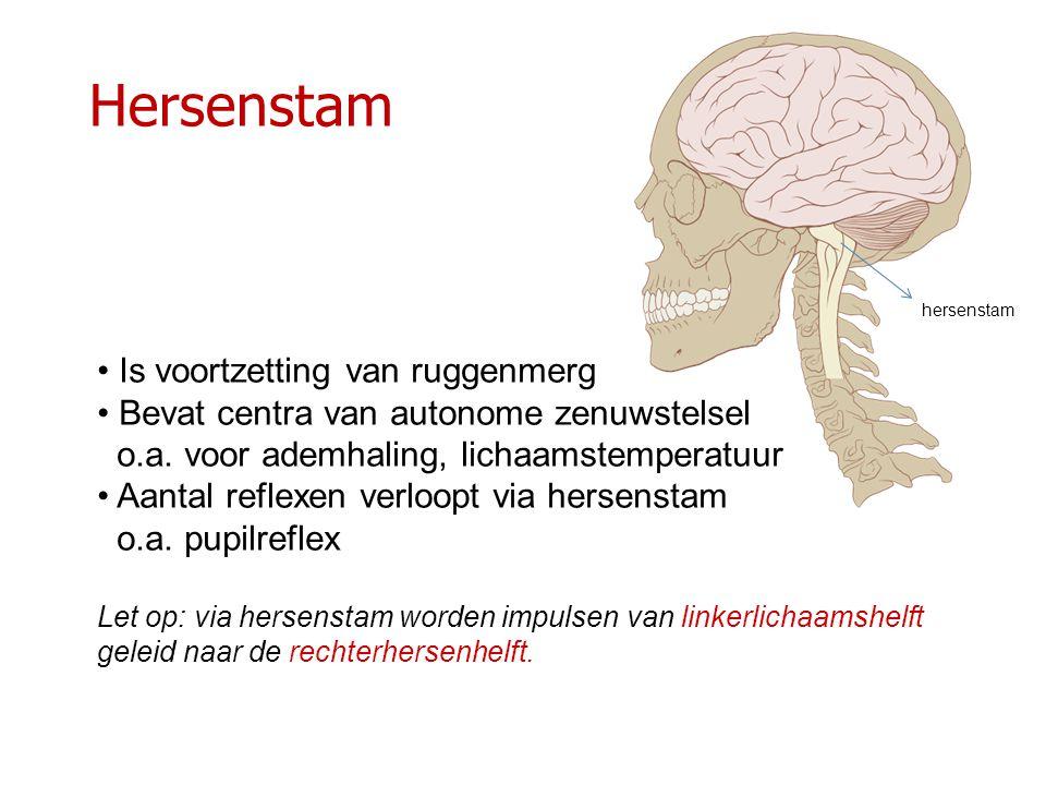 Hersenstam Is voortzetting van ruggenmerg Bevat centra van autonome zenuwstelsel o.a. voor ademhaling, lichaamstemperatuur Aantal reflexen verloopt vi