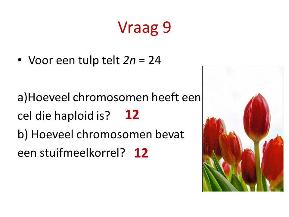 Vraag 9 Voor een tulp telt 2n = 24 a)Hoeveel chromosomen heeft een cel die haploid is? b) Hoeveel chromosomen bevat een stuifmeelkorrel? 12