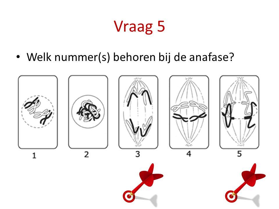 Vraag 5 Welk nummer(s) behoren bij de anafase?