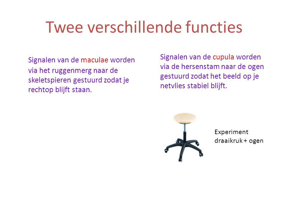 Twee verschillende functies Signalen van de maculae worden via het ruggenmerg naar de skeletspieren gestuurd zodat je rechtop blijft staan. Signalen v