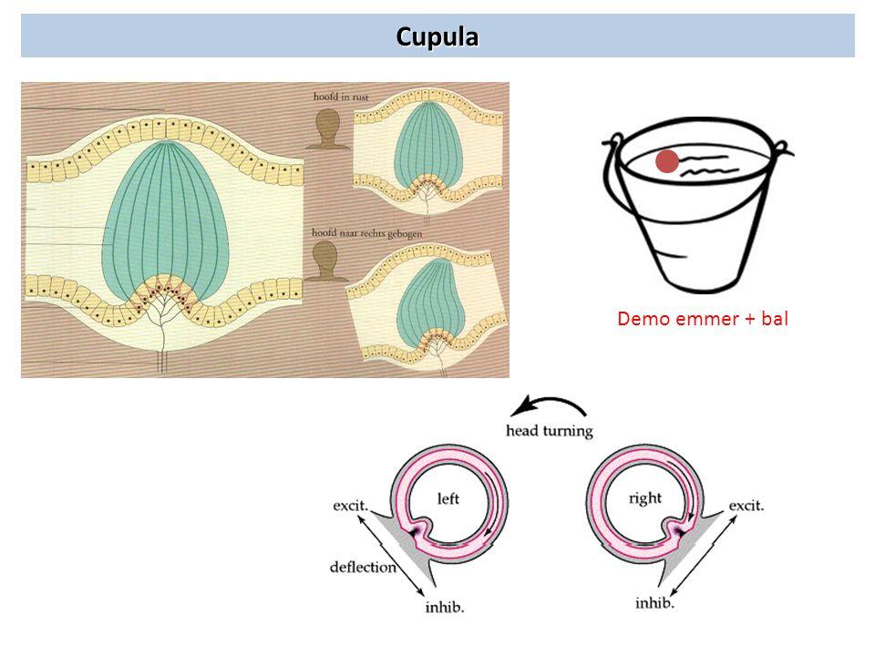 Cupula Demo emmer + bal