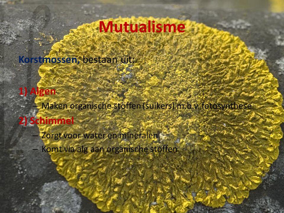 Mutualisme Korstmossen, bestaan uit: 1) Algen – Maken organische stoffen (suikers) m.b.v. fotosynthese 2) Schimmel – Zorgt voor water en mineralen – K