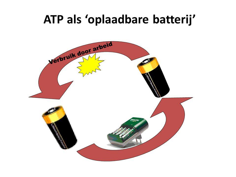 ATP als 'oplaadbare batterij' Verbruik door arbeid