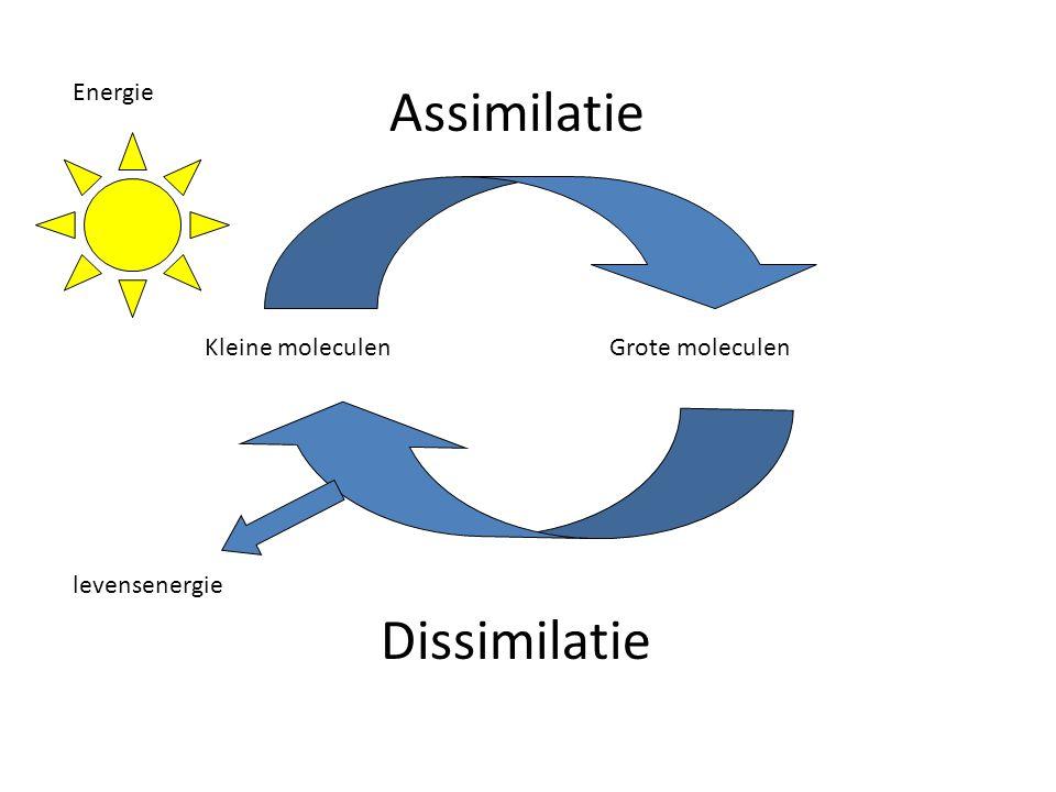 Assimilatie Energie Kleine moleculenGrote moleculen Dissimilatie levensenergie
