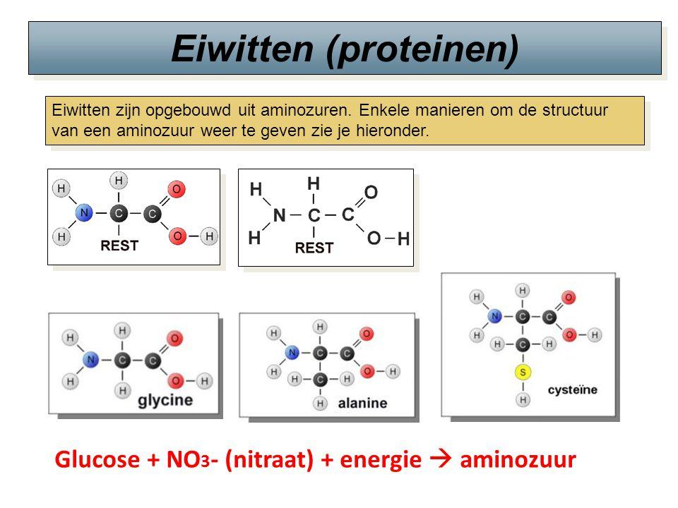Eiwitten (proteinen) Eiwitten zijn opgebouwd uit aminozuren. Enkele manieren om de structuur van een aminozuur weer te geven zie je hieronder. Glucose