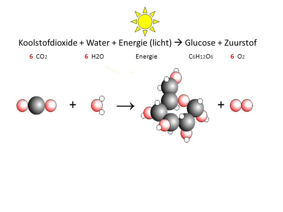 Koolstofdioxide + Water + Energie (licht)  Glucose + Zuurstof CO 2 H2OC 6 H 12 O 6 O2O2 Energie666