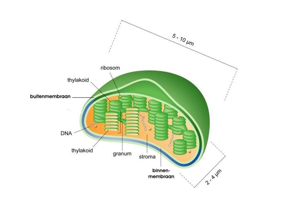 Je kunt de structuur van een eiwit op verschillende manieren veranderen, bijvoorbeeld door de temperatuur te verhogen of de pH te veranderen, bijvoorbeeld door zuur (H + ) toe te voegen.
