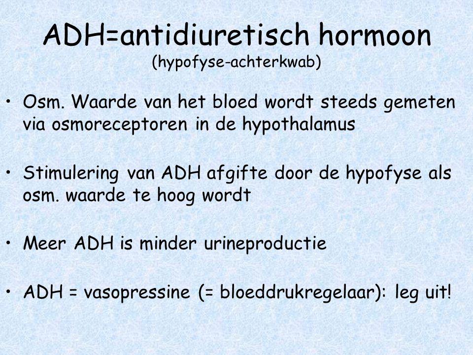 ADH=antidiuretisch hormoon (hypofyse-achterkwab) Osm. Waarde van het bloed wordt steeds gemeten via osmoreceptoren in de hypothalamus Stimulering van