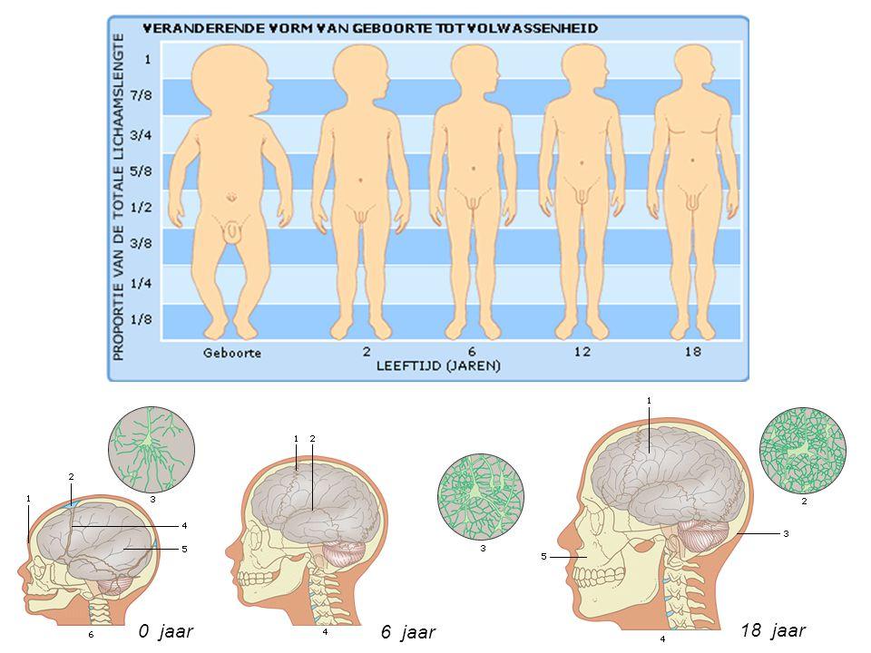 Zenuwcellen in de hersenen