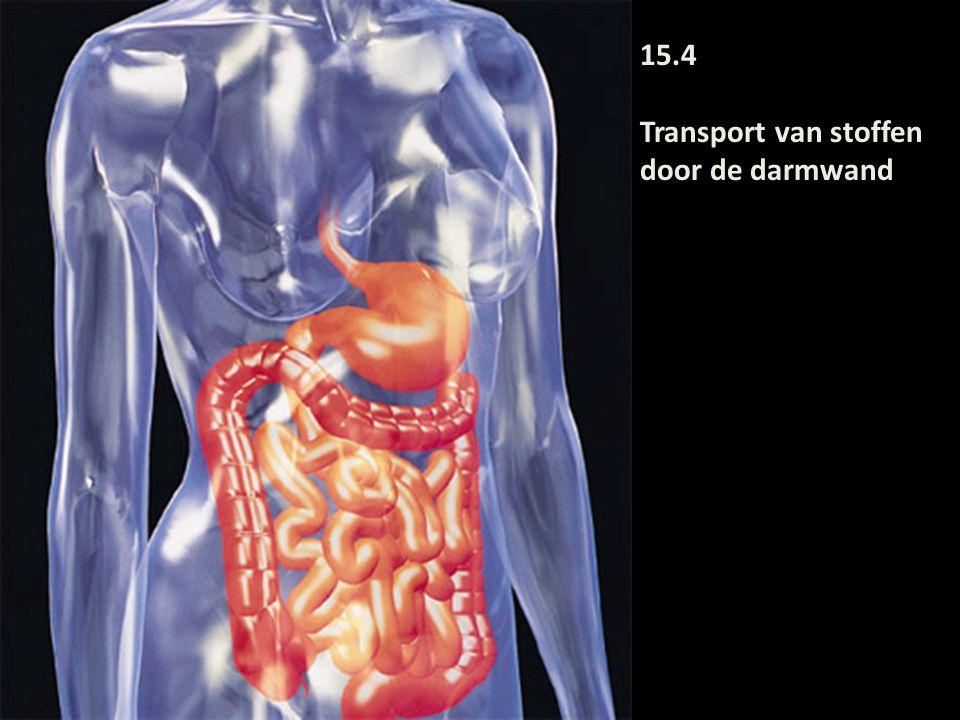 Oppervlaktevergroting darm door: 1)Darmplooien 2)Darmvlokken (villi) 3)Microvilli