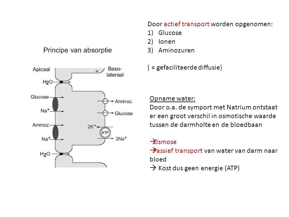 Door actief transport worden opgenomen: 1)Glucose 2)Ionen 3)Aminozuren ( = gefaciliteerde diffusie) Opname water: Door o.a. de symport met Natrium ont