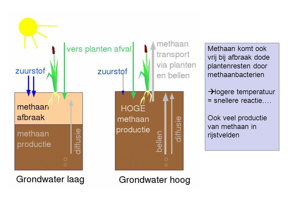 Methaan komt ook vrij bij afbraak dode plantenresten door methaanbacterien  Hogere temperatuur = snellere reactie…. Ook veel productie van methaan in