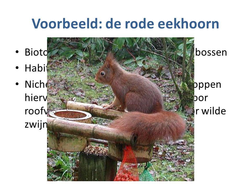 Voorbeeld: de rode eekhoorn Biotoop = gemengde bossen en naaldbossen Habitat = in en om de bomen Niche = eten van nootvruchten, verstoppen hiervan (zaadverspreiding), voedsel voor roofvogels en vossen.