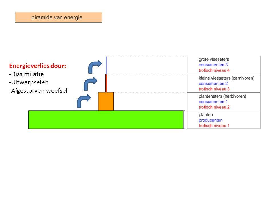 Energieverlies door: -D-Dissimilatie -U-Uitwerpselen -A-Afgestorven weefsel